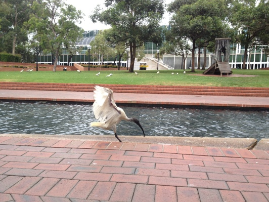 I loved the water features around Darling Harbour -- and the friendly birds who lived there!